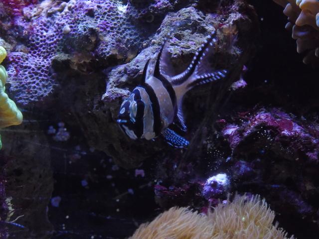 Mes aquariums Dsc01210