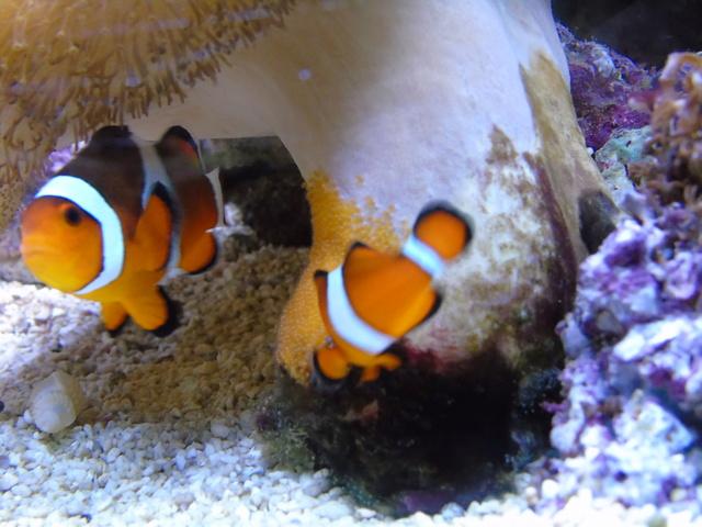 Mes aquariums Dsc02411