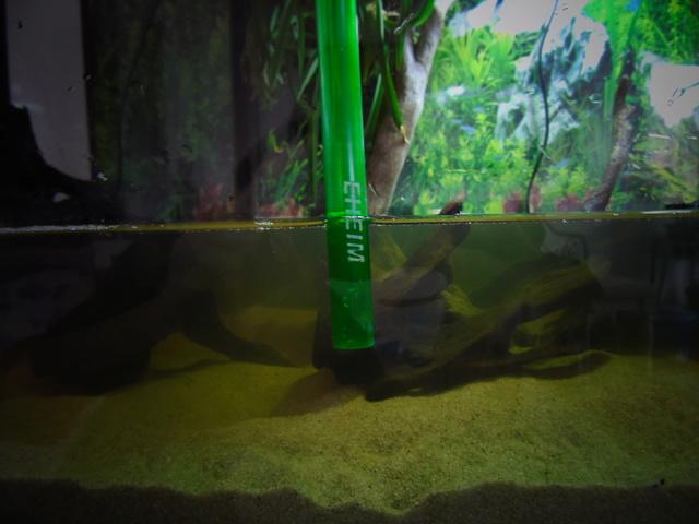 Aquarium de ma petite stenotherus odoratus Dsc03122
