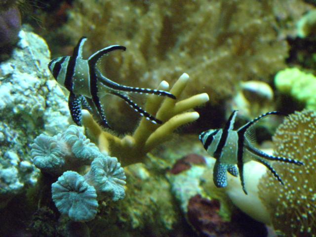 Mes aquariums P5292610