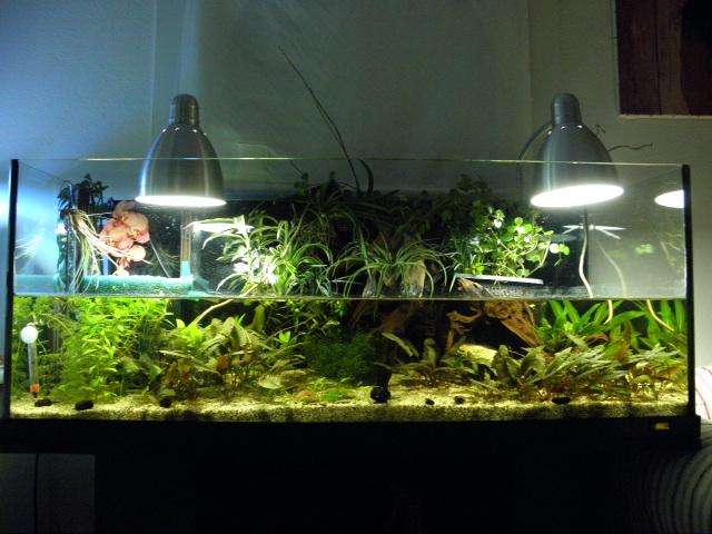 Aquarium de ma petite stenotherus odoratus P9011612