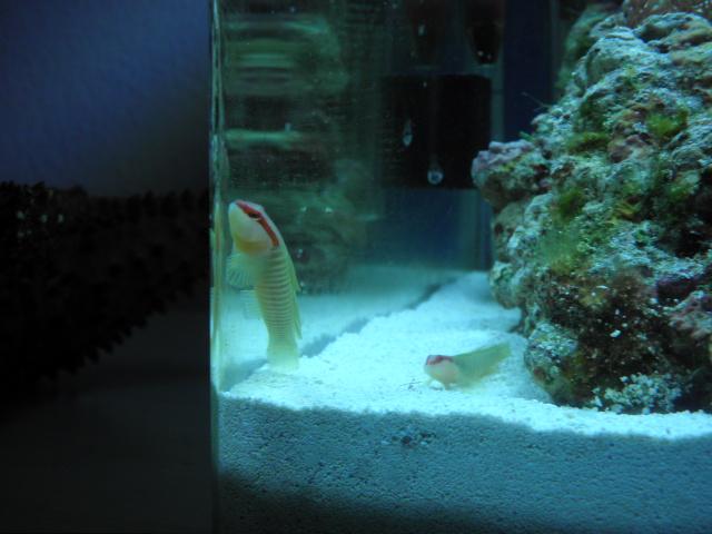 Mes aquariums Pb031910