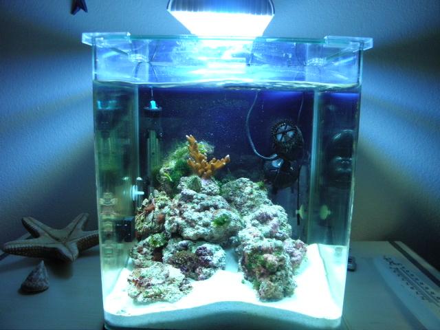 Mes aquariums Pc012010