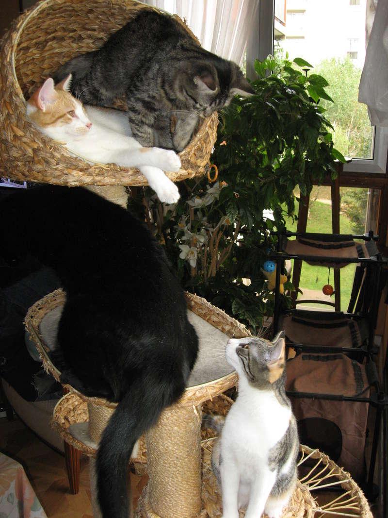 Mélisse, Cayenne et Sésame en FA - Page 3 Img_3918