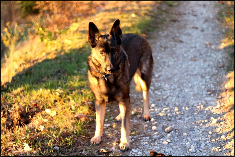 Ico, berger allemand et Misca, leonberg. - Page 9 Img_3511