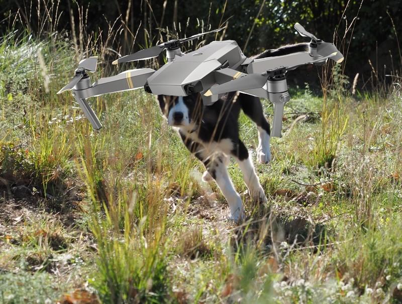 À quoi utilisez vous un drone dans l'agriculture? Border10
