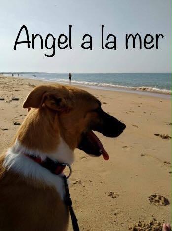 Angel adoptée dans le 85 Angel_10