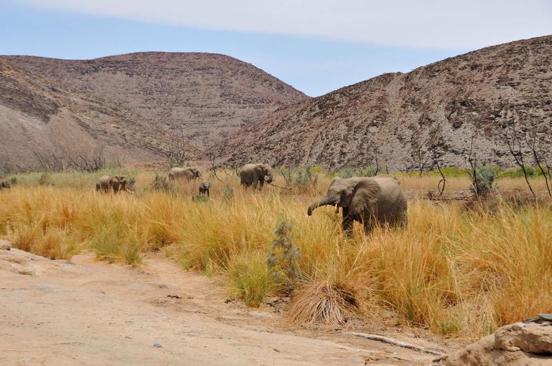 Namibie octobre 2019 - Page 5 Dsc_6414