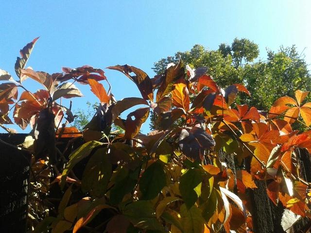 couleurs d'automne - Page 9 Automn10