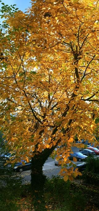 couleurs d'automne - Page 9 Noyer_12