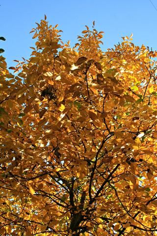 couleurs d'automne - Page 9 Pastel13