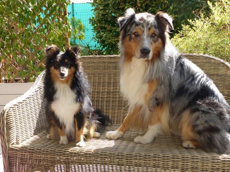 agressif* - Guess: hyperréactivité aux bruits et aux autres chiens - Page 6 21761410