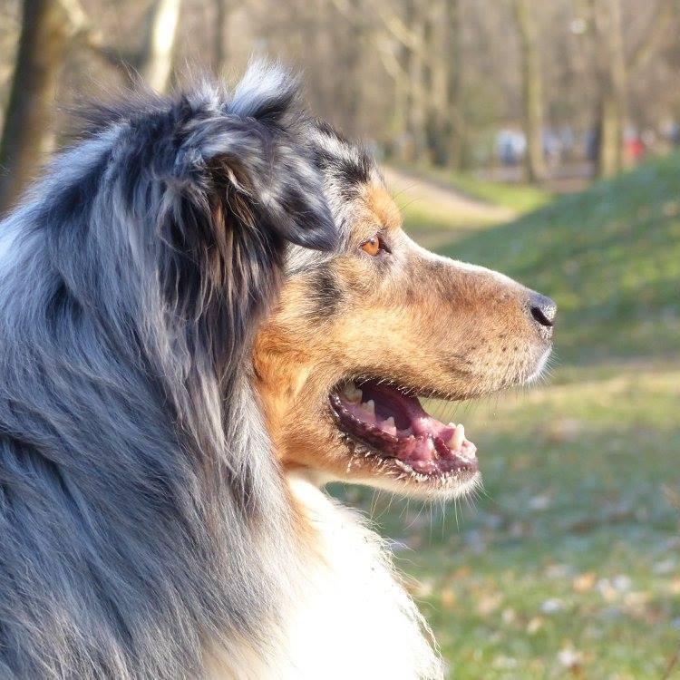 agressif* - Guess: hyperréactivité aux bruits et aux autres chiens - Page 6 22046710