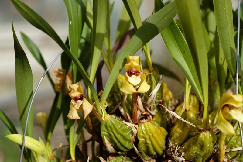 Orchideen 3 (fortlaufende Seiten 300 bis 400) - Seite 20 Max-po10
