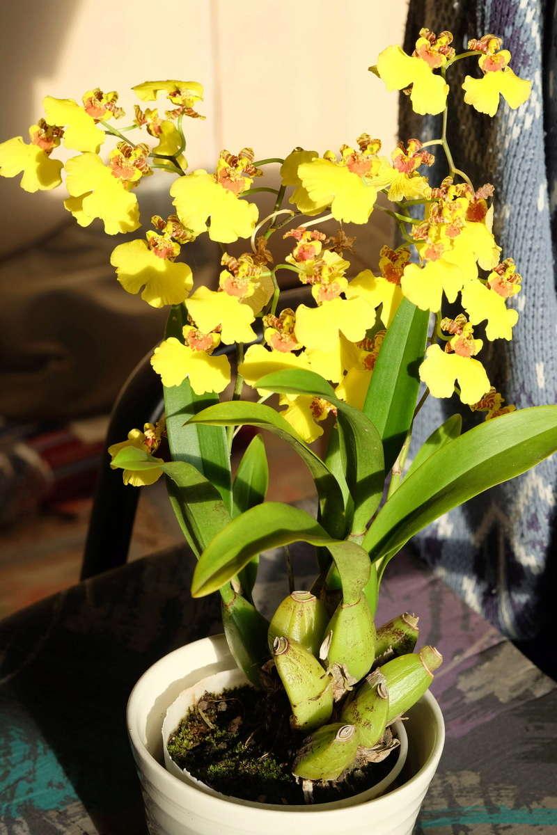 Orchideen 2 (fortlaufende Seiten 200 bis 300) - Seite 100 Sweets10