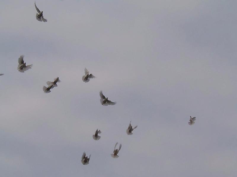 Бакинские голуби - Страница 3 Image_10