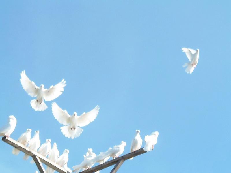 Бакинские голуби - Страница 3 Image_11