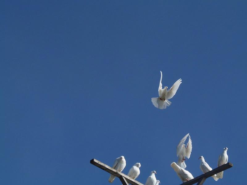 Бакинские голуби - Страница 3 Image_12