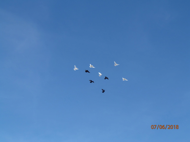Бакинские голуби - Страница 3 P6070410