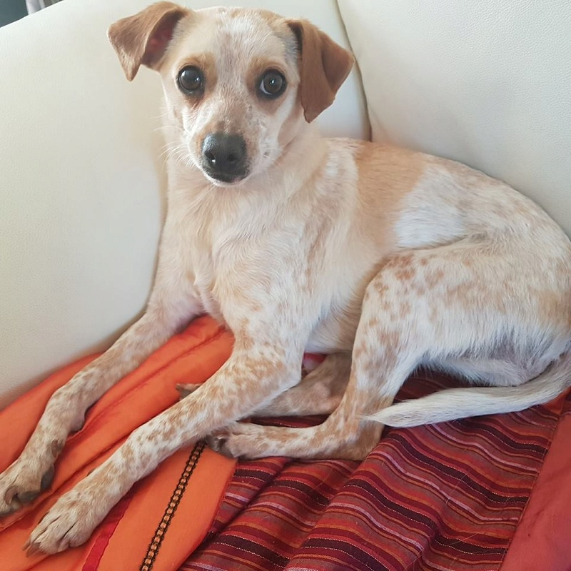 Noisette - A ADOPTER 31706411