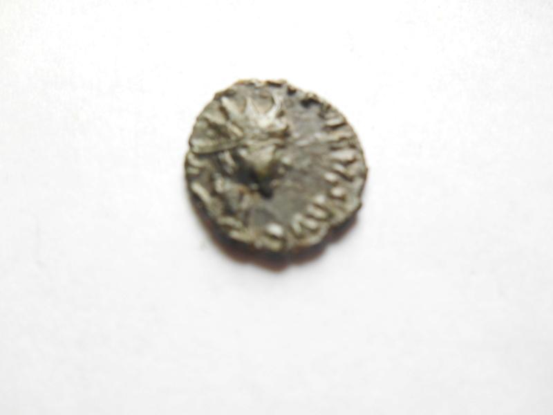 id petit romaine 00613