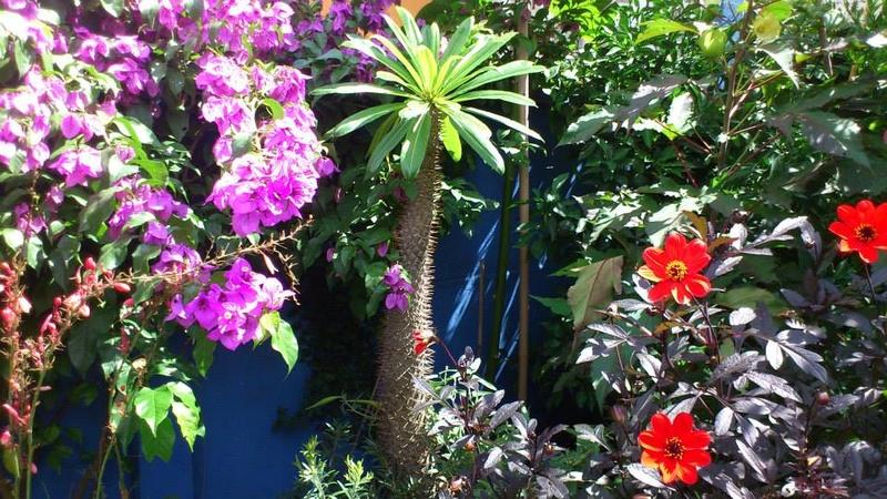 Mon petit jardin Bordelais - Page 3 10603411