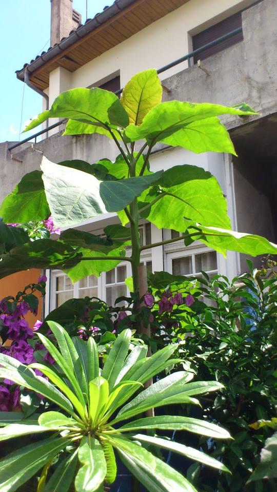 Mon petit jardin Bordelais - Page 3 10620811