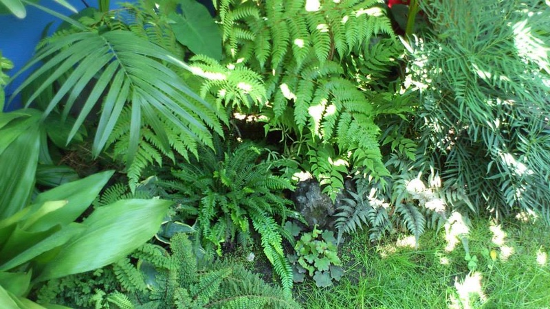 Mon petit jardin Bordelais - Page 3 10624911