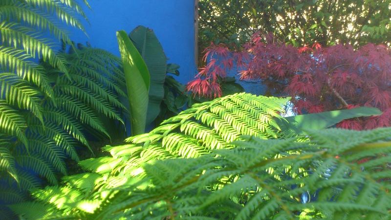 Mon petit jardin Bordelais - Page 3 Dsc_1410
