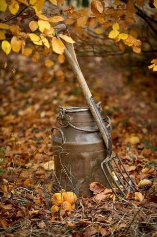 Photos d'automne - Page 2 19905410