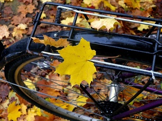 Photos d'automne - Page 3 22045910