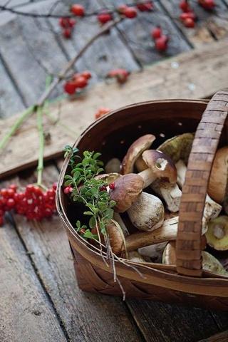 Photos d'automne - Page 2 22046510