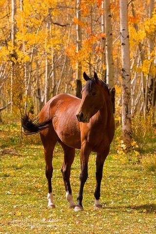 Photos d'automne - Page 3 22089310