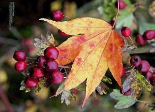 Photos d'automne - Page 5 22196310