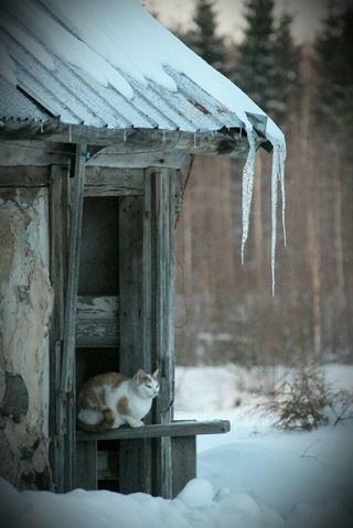 Photos d'hiver  - Page 9 32bc8014