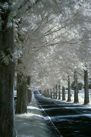 Photos d'hiver  - Page 4 9a95d910