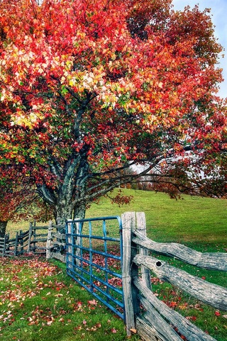 Photos d'automne - Page 5 F74c5f10