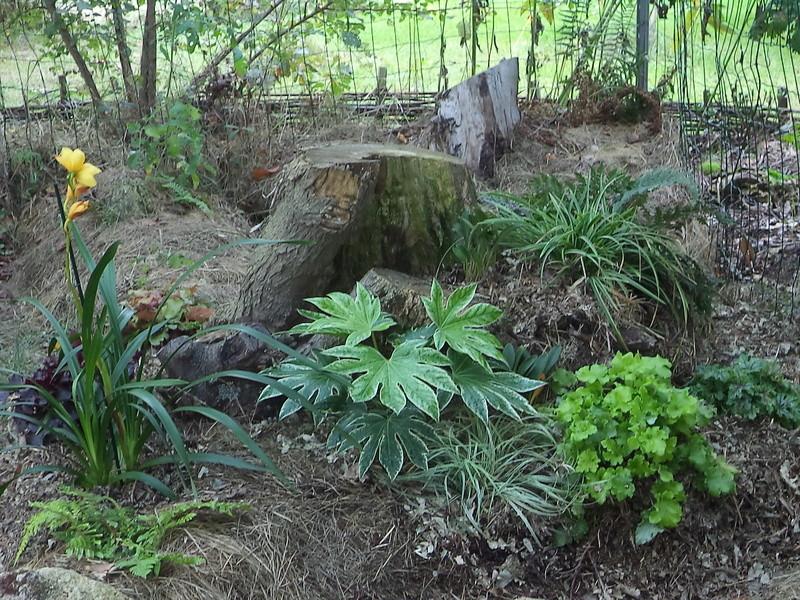 permaculture et autres jeux de jardin - Page 2 Dsc02210