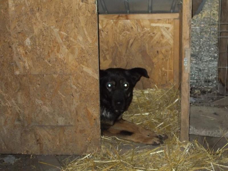 TINNA,  née en 2012 trouvée dans la rue par Lenuta - marrainée par lilirez02 -R-SC 24955413