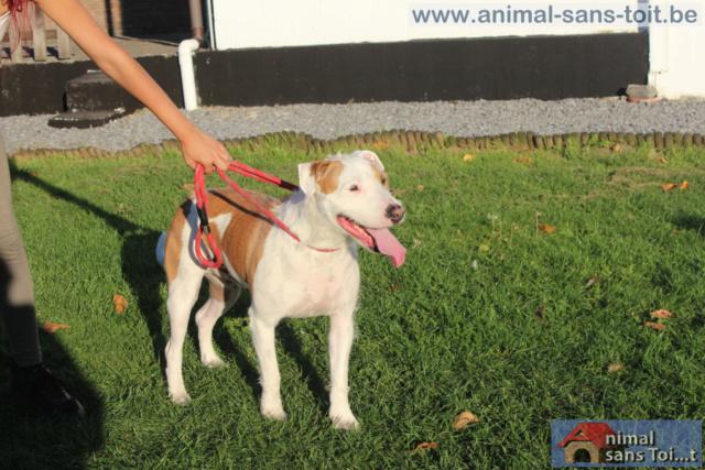 HUNTER - x griffon 5 ans -  Refuge Animal sans Toit à Grace Hollogne (Belgique) 11128