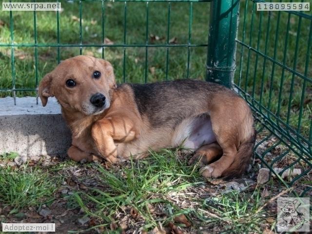 MaxCroisé Jack-Russel-Terrier, Mâle 2 ANS 118.095.594 Cointe 2460