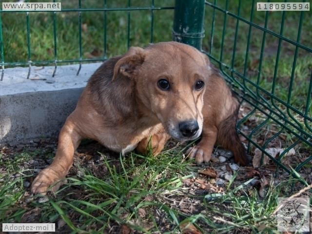 MaxCroisé Jack-Russel-Terrier, Mâle 2 ANS 118.095.594 Cointe 3398