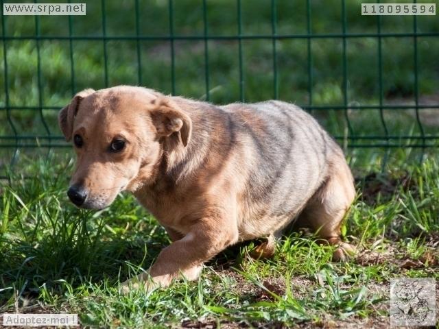 MaxCroisé Jack-Russel-Terrier, Mâle 2 ANS 118.095.594 Cointe 5287