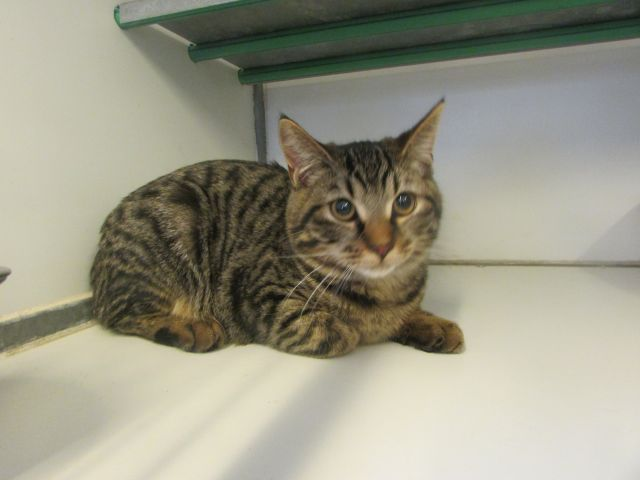 Les Chats Male De Cointe A ADOPTE ;) - Page 2 I1097852