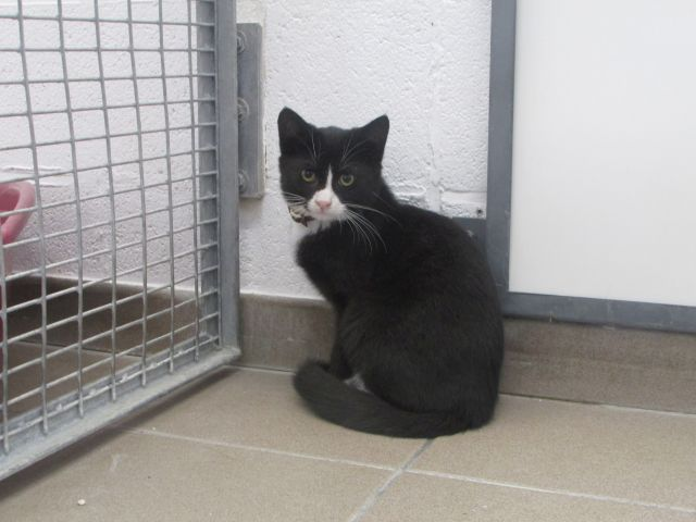 Les Chats Male De Cointe A ADOPTE ;) - Page 2 I1098229