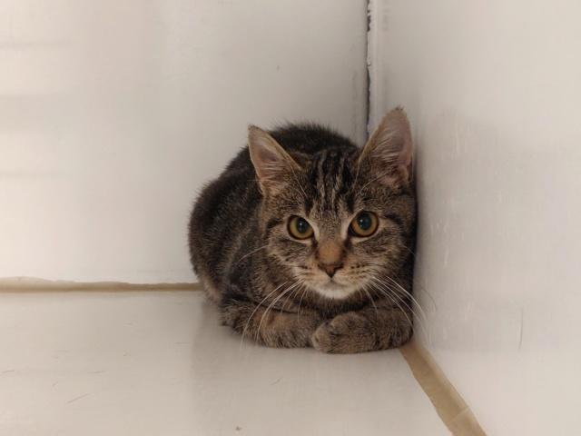 Les Chats Male De Cointe à Adopté  !!! I1098335