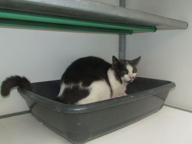Les Chats Male De Cointe à Adopté  !!! I1098720