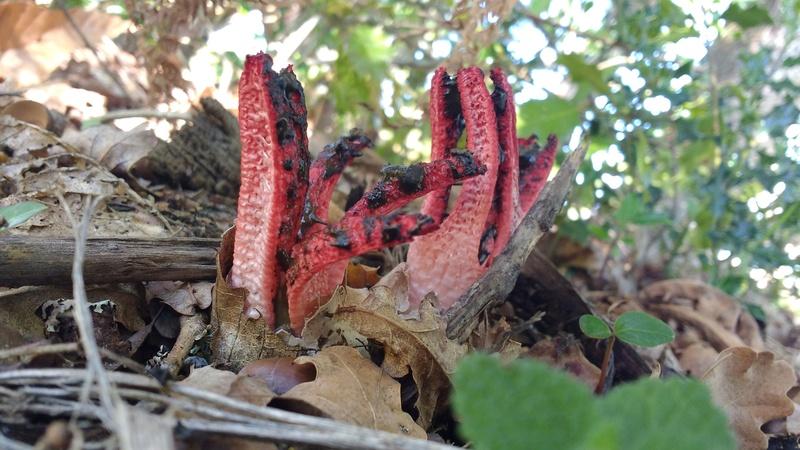 Quelques champignons... Img_2015