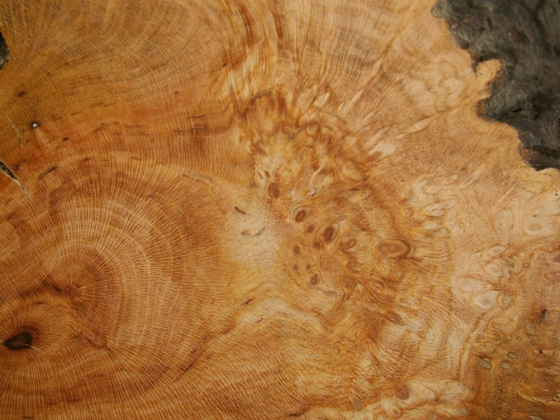 Wood plates_Ji-ita Locotu11