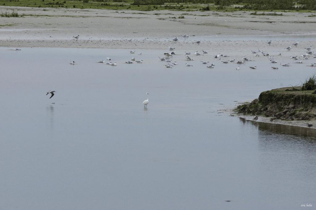 La baie de Goulven  _dsc8111